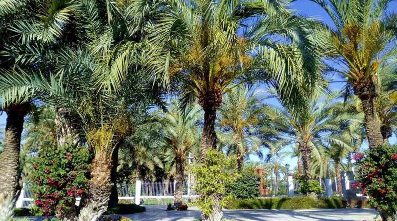 PALMERAL DE ELCHE – Gaj palmowy obok Alicante!