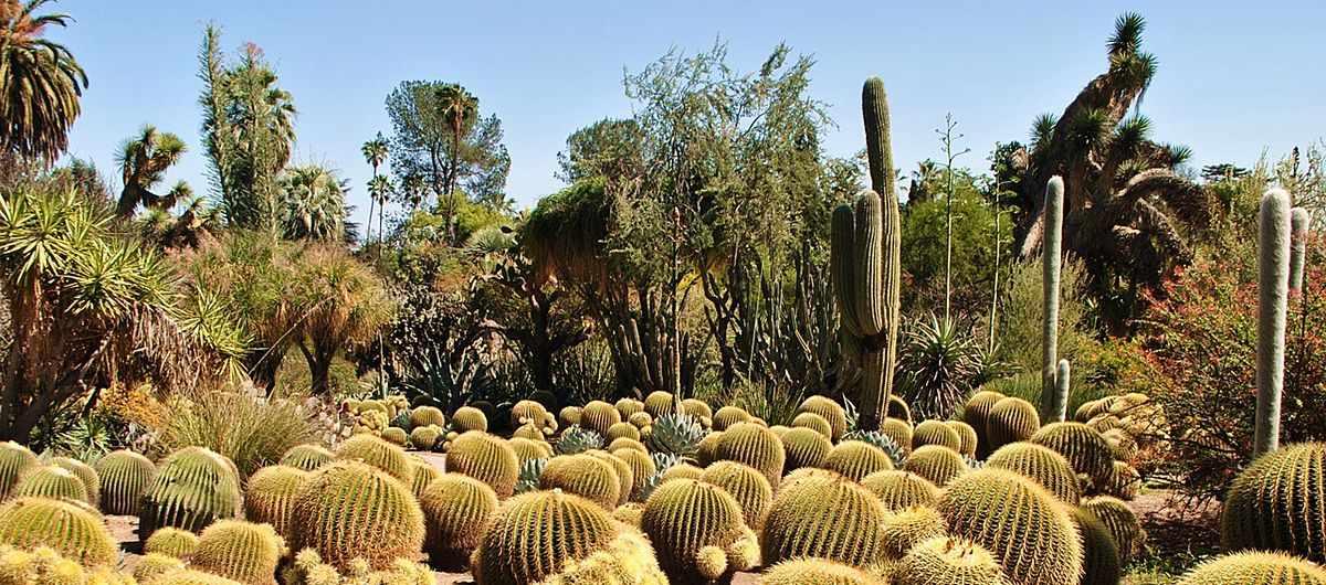 Jardín Canario Gran Canaria