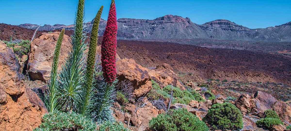 Park Narodowy Teide Teneryfa