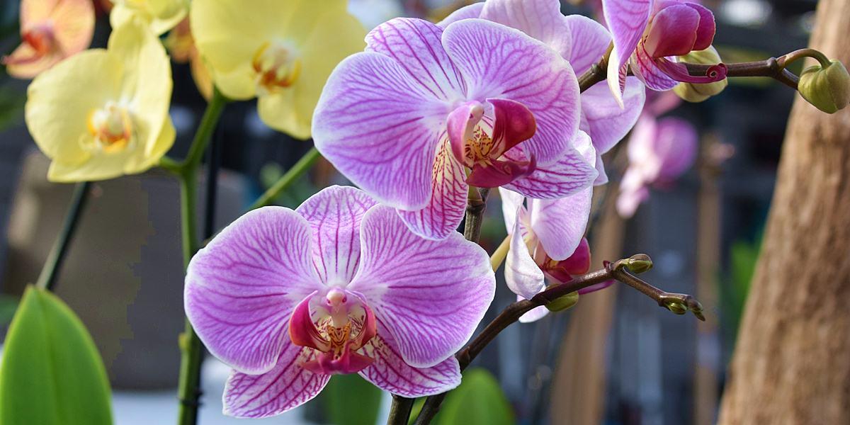 Orchidarium w Esteponie